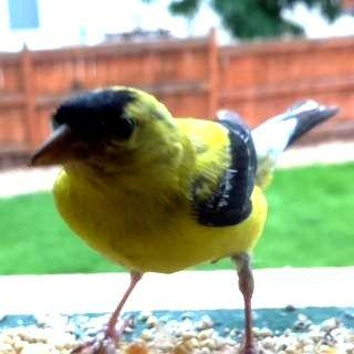 Tweeting Bird Feeder
