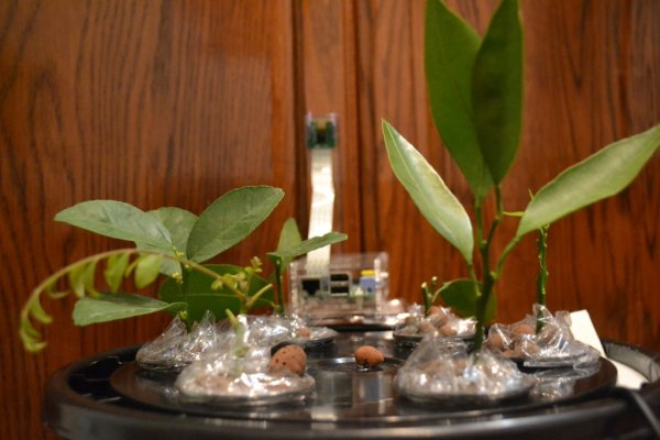 Automated Aeroponics System Using Raspberry Pi