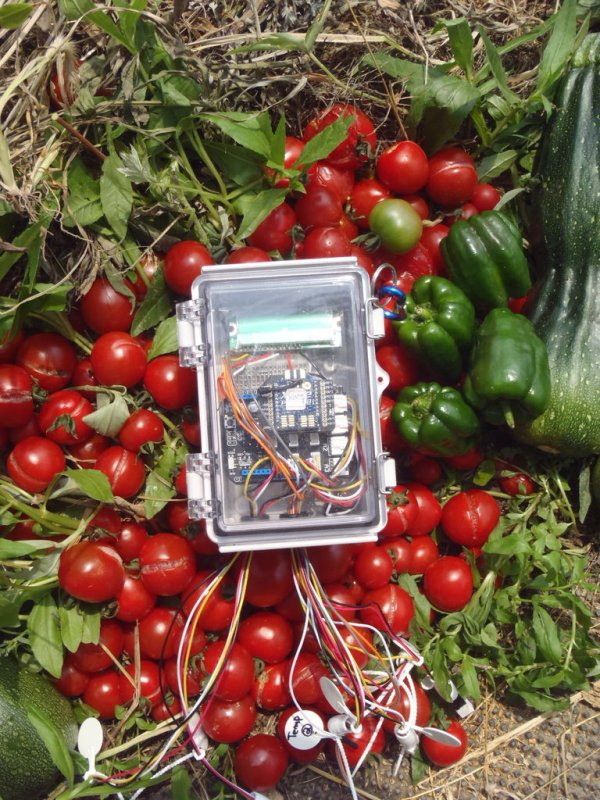 Automated vegetable cultivation system
