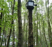 ARUPi – A Low-Cost Automated Recording Unit for Soundscape Ecologists