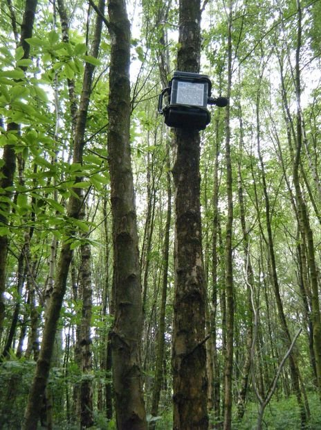 ARUPi  A Low Cost Automated Recording Unit for Soundscape Ecologists