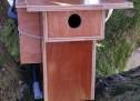Raspberry with cam in birdhouse