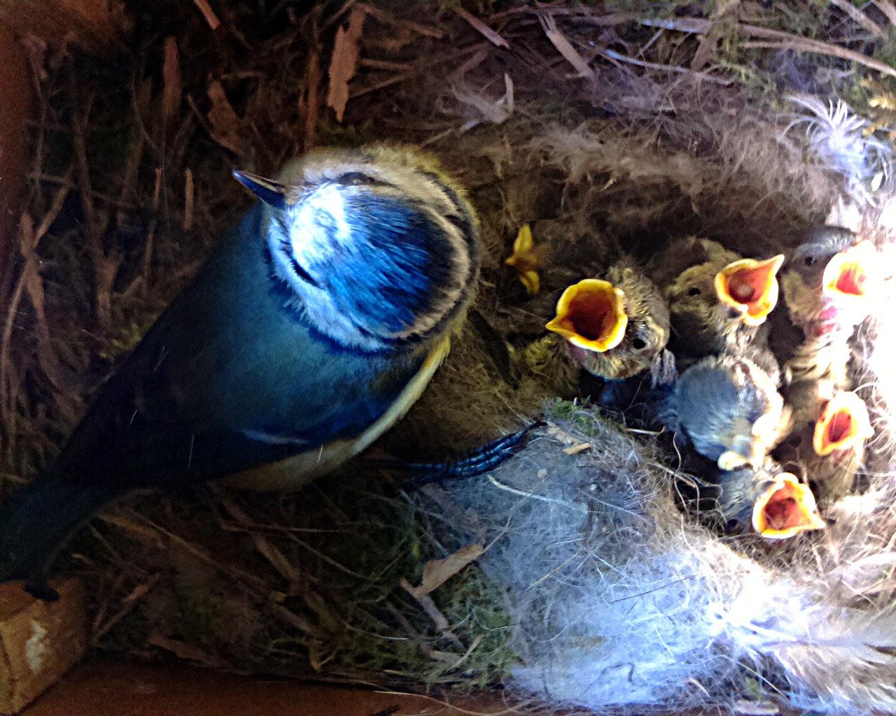 BirdBox2015
