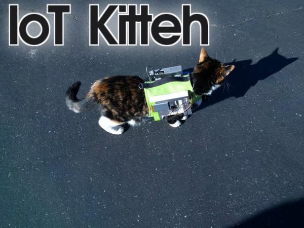a cellular and gps connected cat vest that communicates through aws iot kitteh