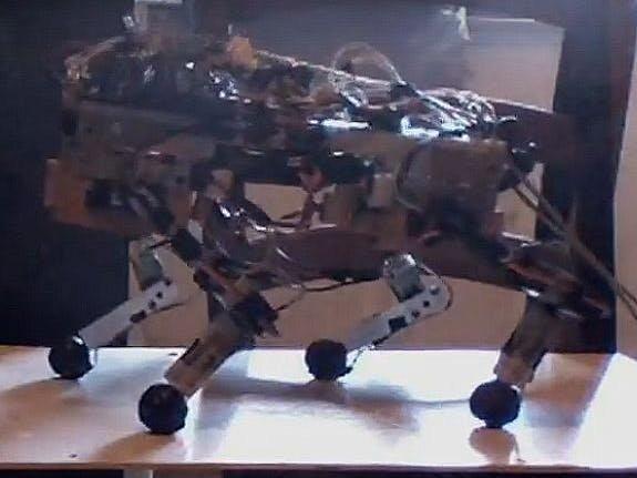 Quadruped Autonomous Robot
